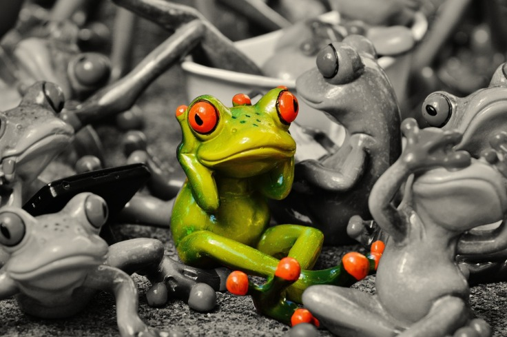 frogs-1413727_1920