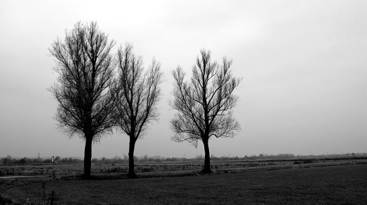 black-white-3847959_960_720
